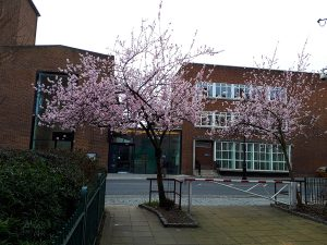two pink blossoming trees